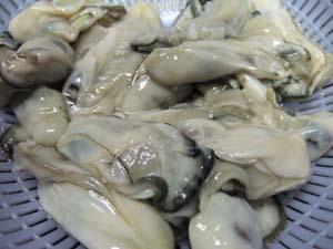 牡蠣を洗う